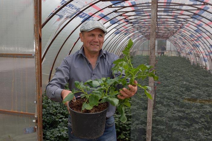 В «фермерской лаборатории» А.Г. Крылова